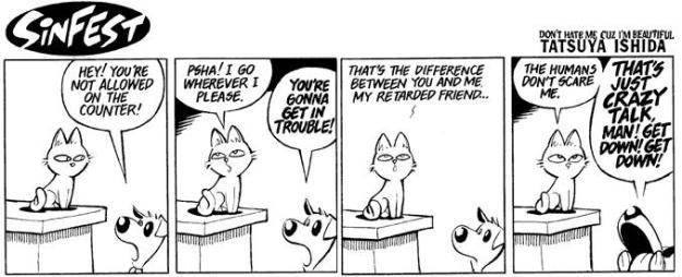 kitty maintainance
